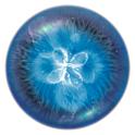 osmos-hd-logo-icone